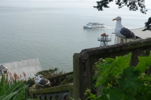2016alcatraz-feb-birds