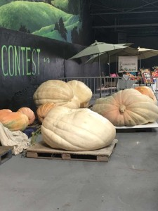 2017expo_giant_pumpkins