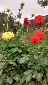2017gulch_yellow_red_flowers