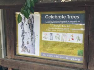 2018trees2-exhibit