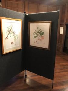 2018botanical_panels