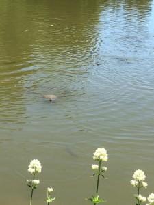 2019maison_turtle